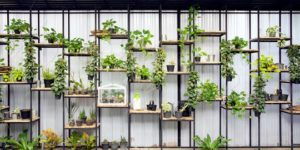 cara-merawat-taman-vertikal-di-rumah