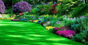 spesialis jasa pembuatan taman